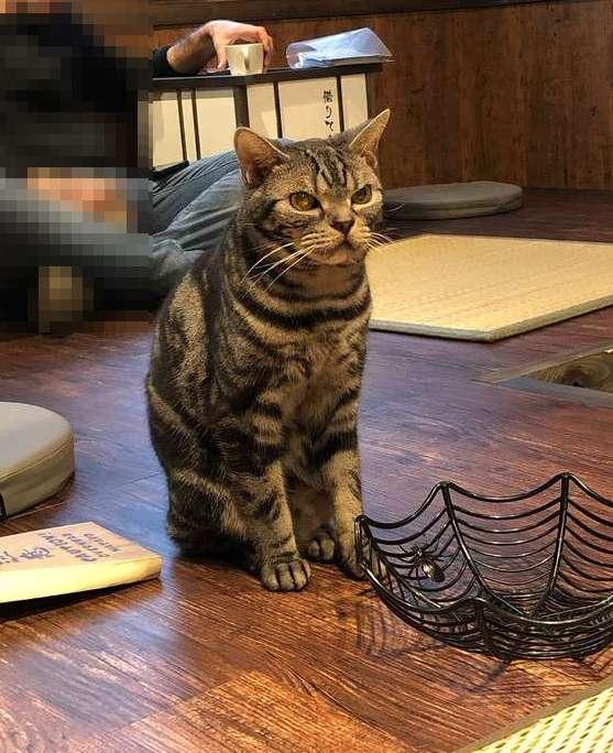 きゃりこ新宿店の猫19