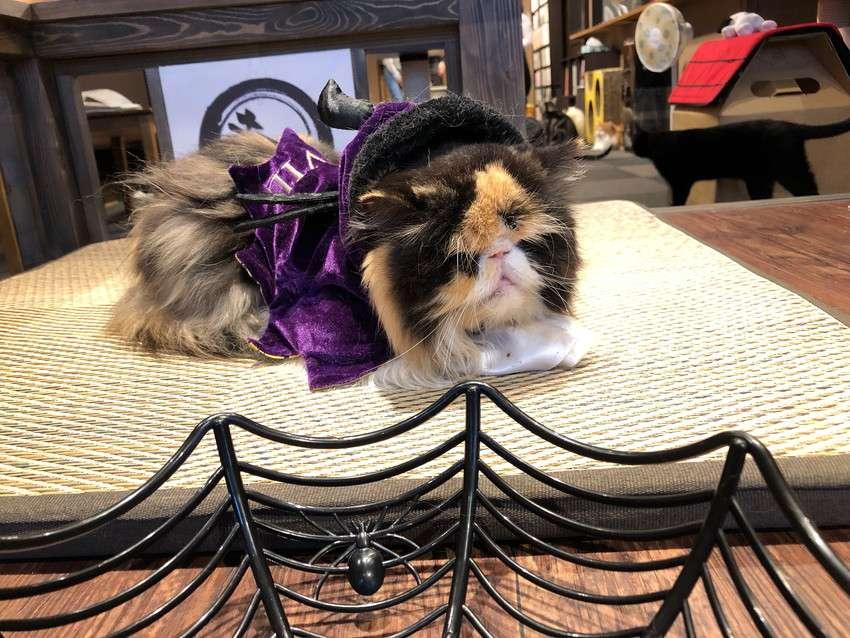 きゃりこ新宿店のハロウィンコスチュームの猫2