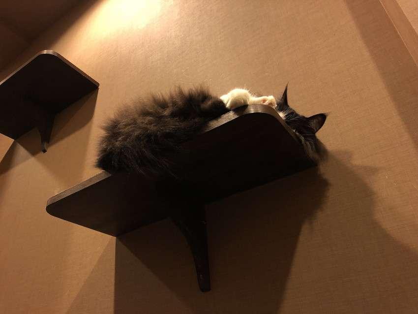 きゃりこ新宿店の猫6