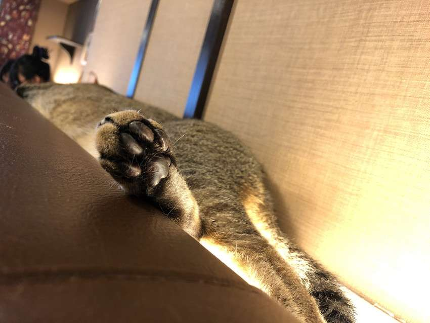 きゃりこ新宿店の猫15
