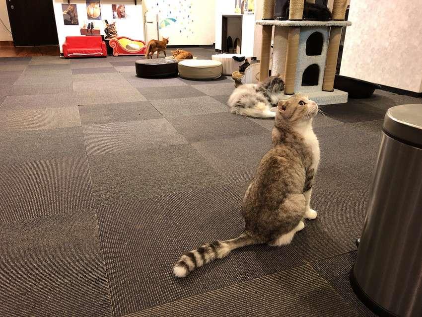 きゃりこ新宿店の猫1