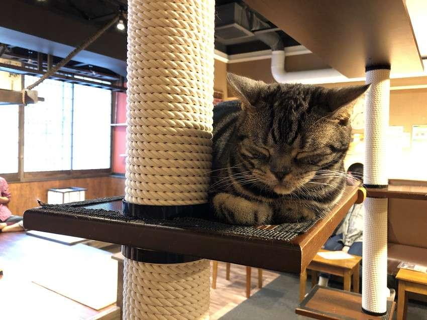きゃりこ新宿店の猫11