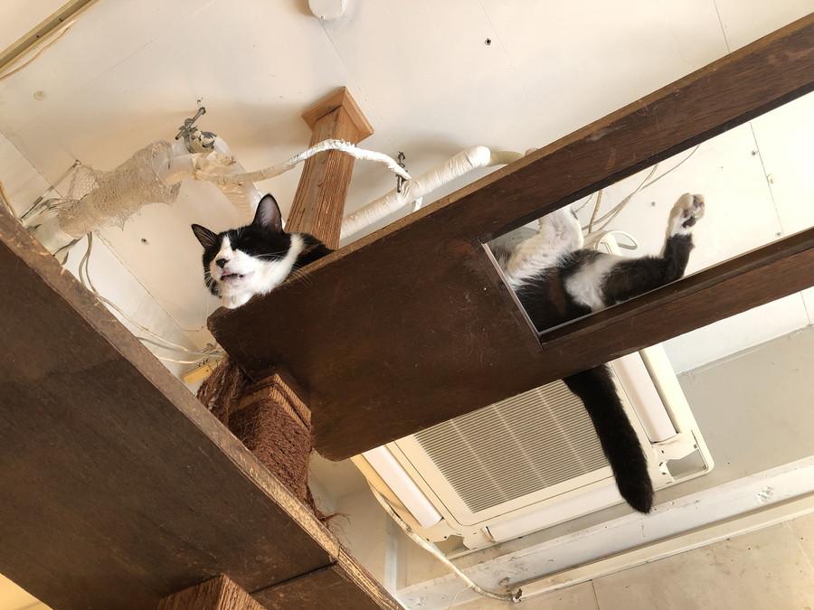 キューリグの猫1