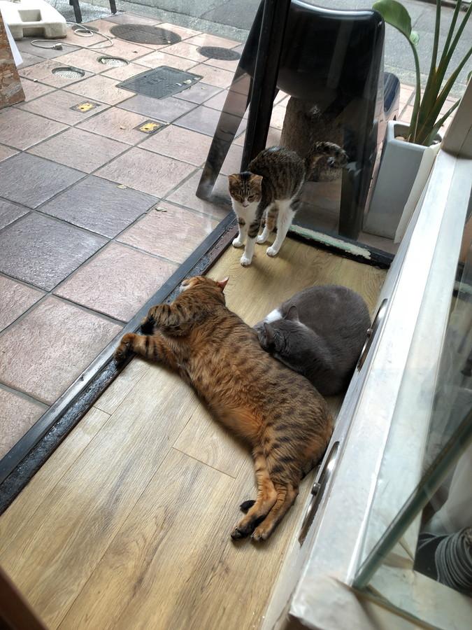 キューリグの猫9