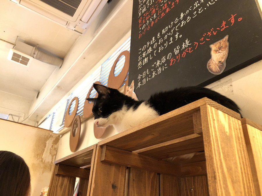 猫カフェキューリグ大名店アイキャッチ