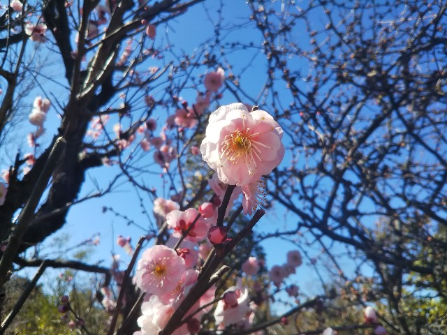 f:id:yoshimi24h:20210224154837j:image