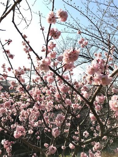f:id:yoshimie:20180317231812j:image