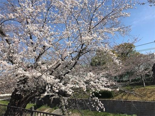 f:id:yoshimie:20180328115453j:image