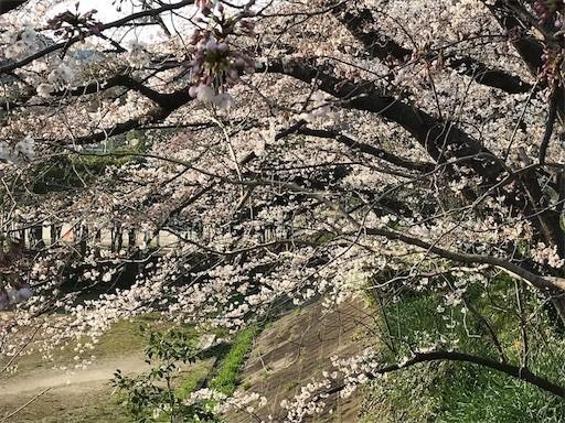 f:id:yoshimie:20180328120147j:image