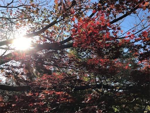 f:id:yoshimie:20181122074336j:image