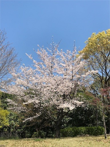 f:id:yoshimie:20190414071645j:image