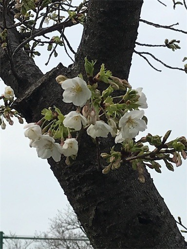 f:id:yoshimie:20200327143217j:image