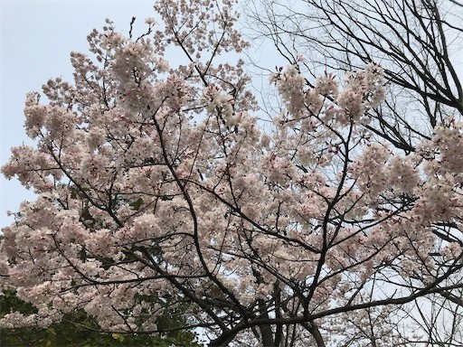 f:id:yoshimie:20200327143315j:image