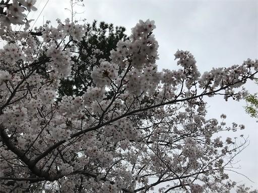 f:id:yoshimie:20200402163901j:image