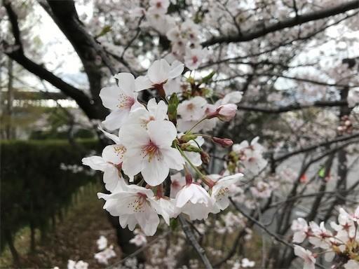 f:id:yoshimie:20200402163929j:image