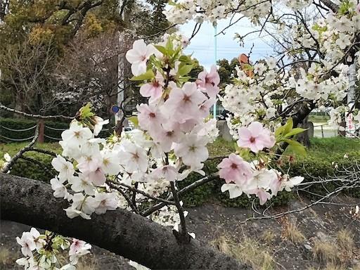 f:id:yoshimie:20200402163942j:image