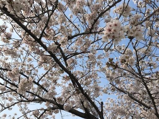 f:id:yoshimie:20200412143207j:image