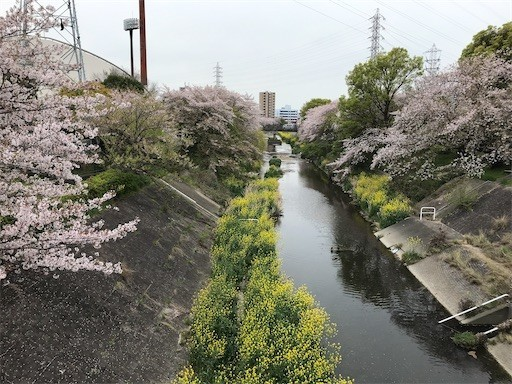 f:id:yoshimie:20200412144328j:image