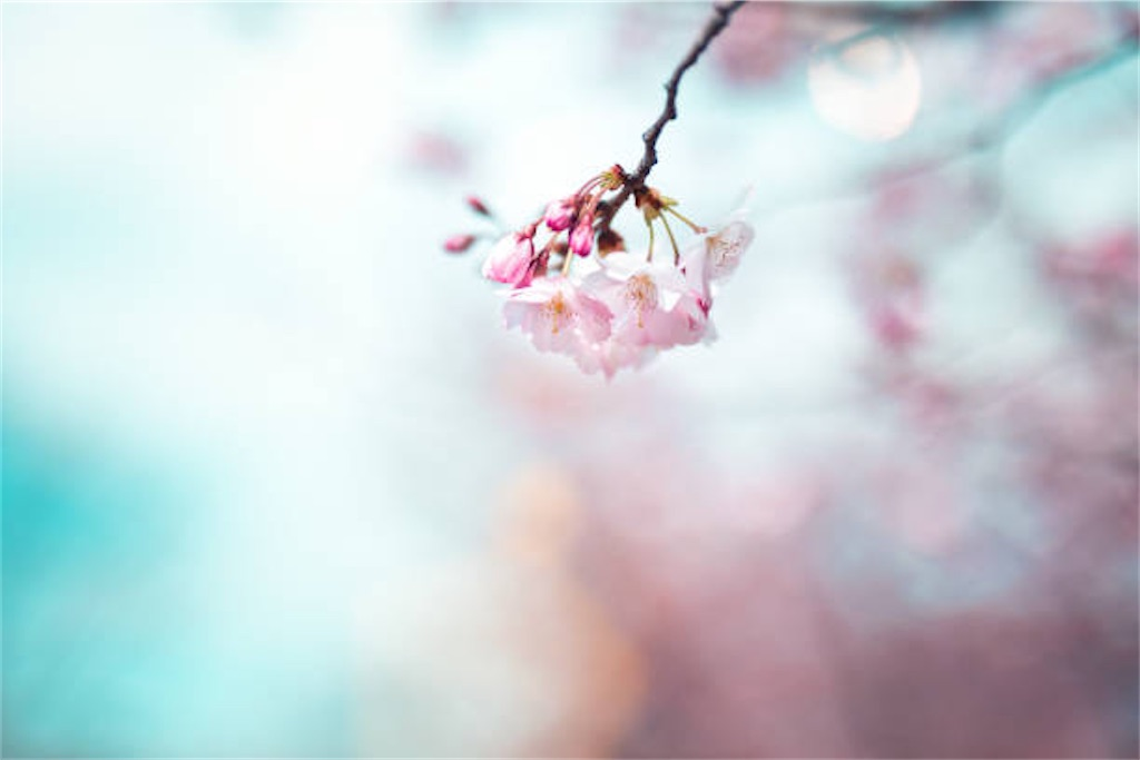 f:id:yoshimike:20200323062353j:image