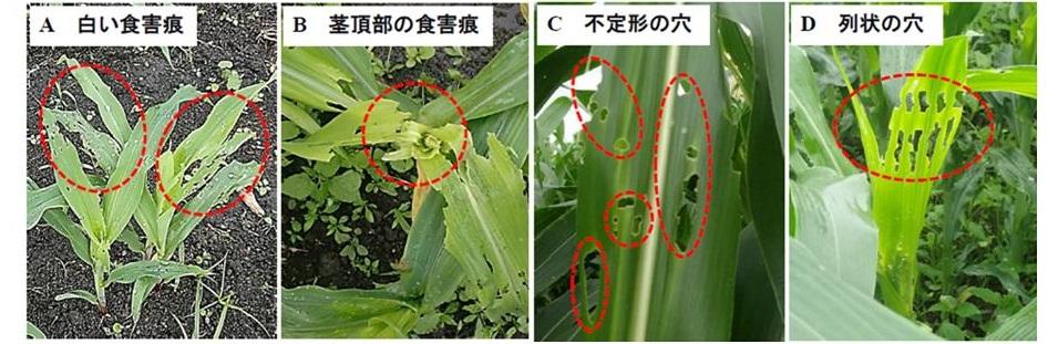 f:id:yoshinogawa-nougyou:20200619140134j:plain