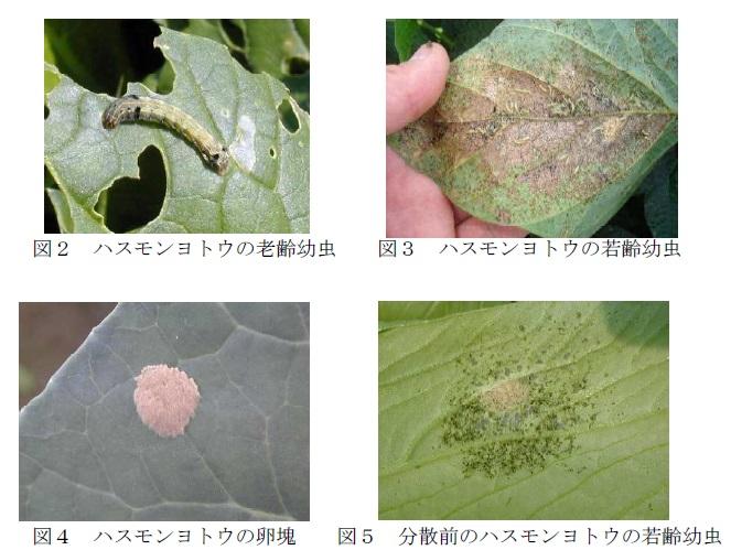 f:id:yoshinogawa-nougyou:20200703103034j:plain