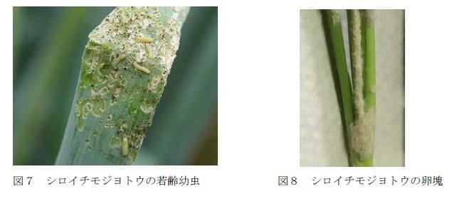 f:id:yoshinogawa-nougyou:20200703104456j:plain