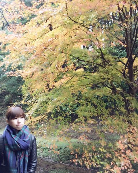 f:id:yoshinokaori:20161125132618j:plain