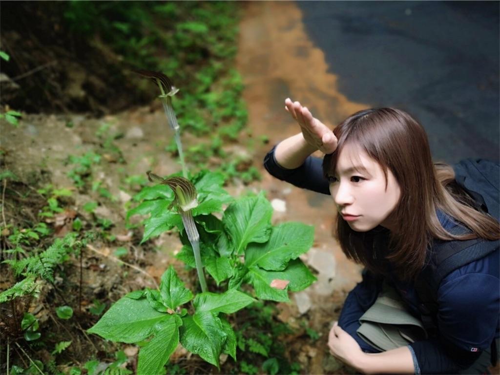 f:id:yoshinokaori:20190426125029j:plain
