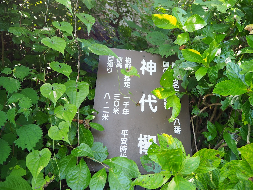 f:id:yoshinokaori:20200814105359j:plain