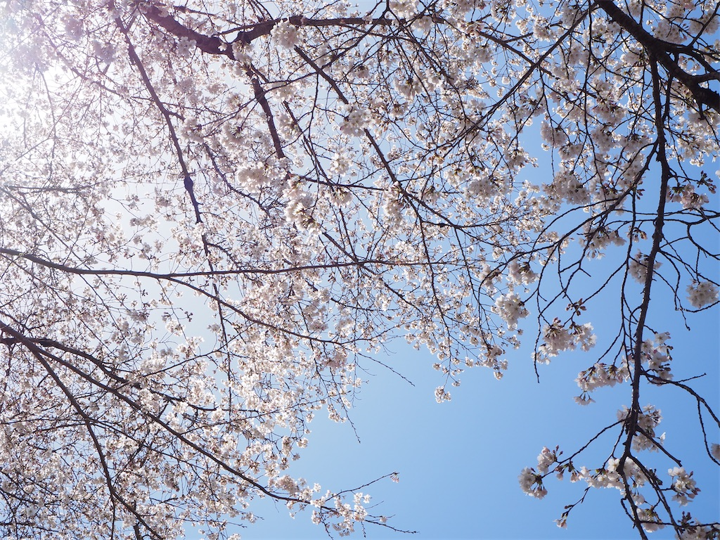 f:id:yoshinokaori:20210401141032j:plain