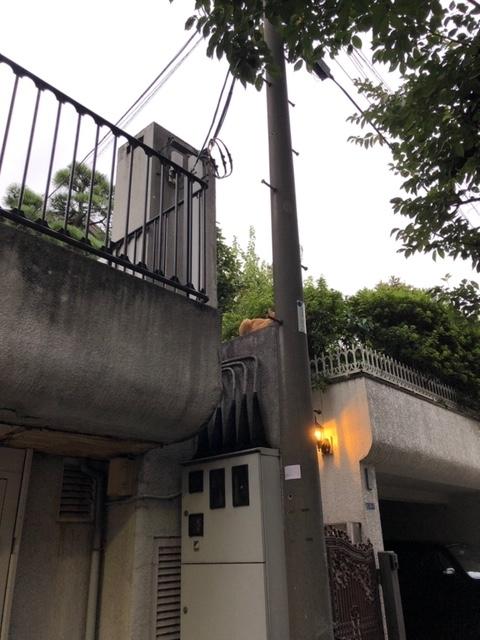 f:id:yoshinori-hoshi:20190905174134j:plain