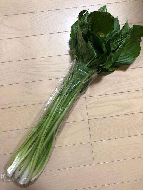f:id:yoshinori-hoshi:20200528230747j:plain
