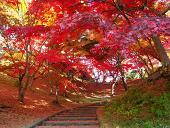 f:id:yoshiro1334:20121203132040j:image:w360