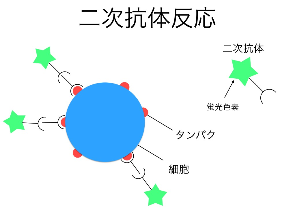 f:id:yoshitokamizato:20160713210356j:plain