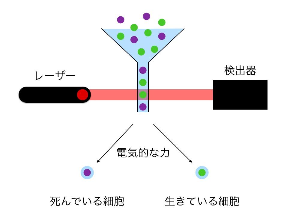 f:id:yoshitokamizato:20160714061703j:plain