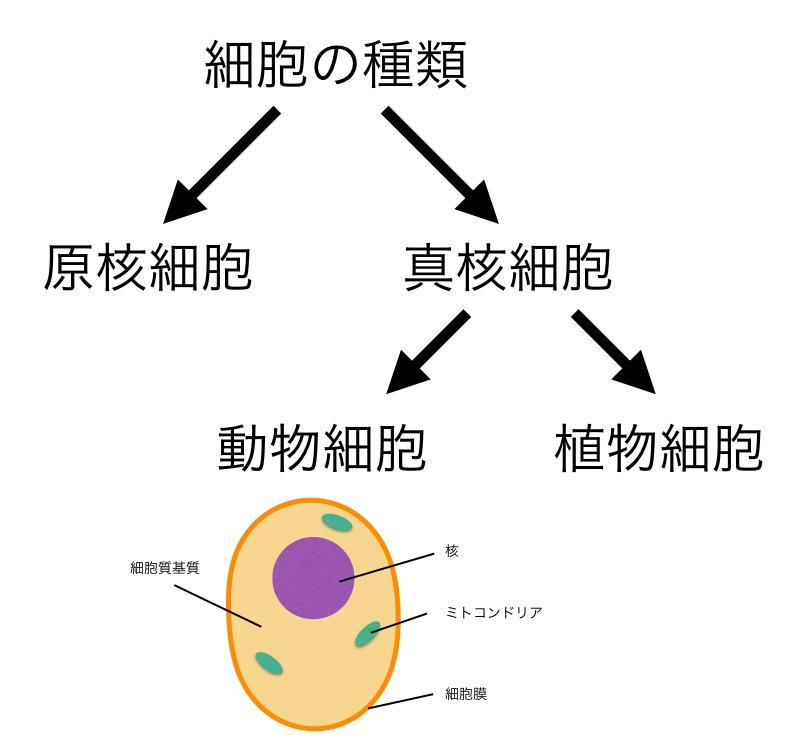 f:id:yoshitokamizato:20160725211058j:plain
