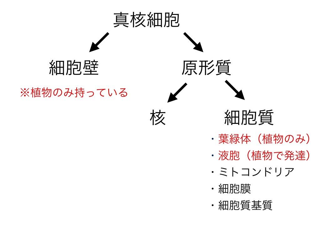 f:id:yoshitokamizato:20160805215931j:plain