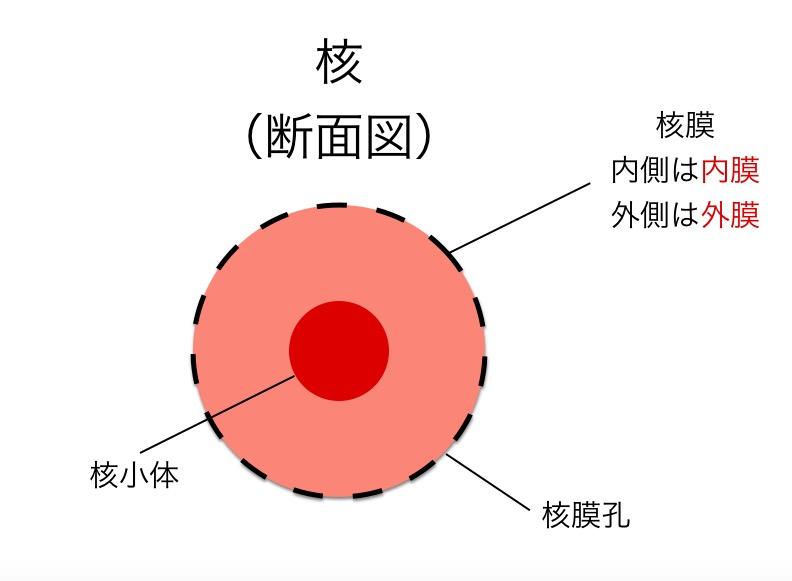 f:id:yoshitokamizato:20160818204150j:plain