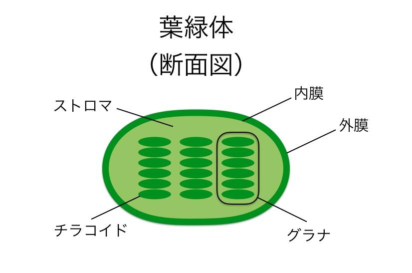 f:id:yoshitokamizato:20160818204310j:plain