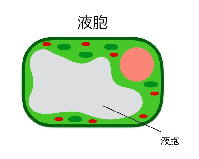 f:id:yoshitokamizato:20160818210337j:plain