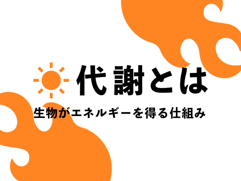 f:id:yoshitokamizato:20180730203308j:plain