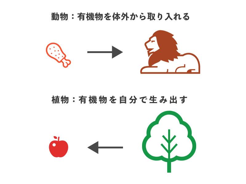 f:id:yoshitokamizato:20180730203934j:plain