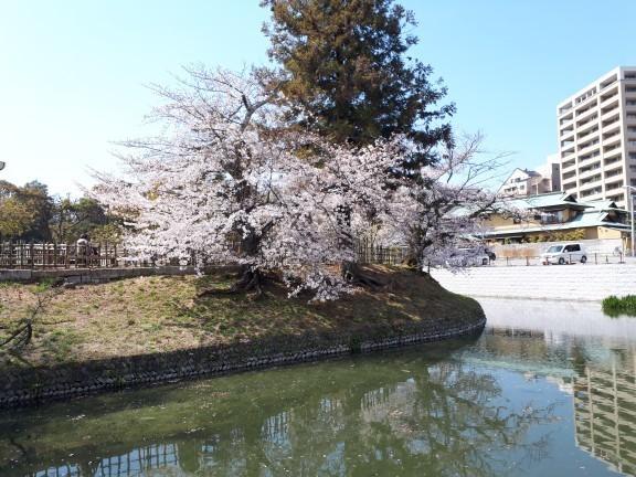 f:id:yoshitomushi:20190402142454j:plain