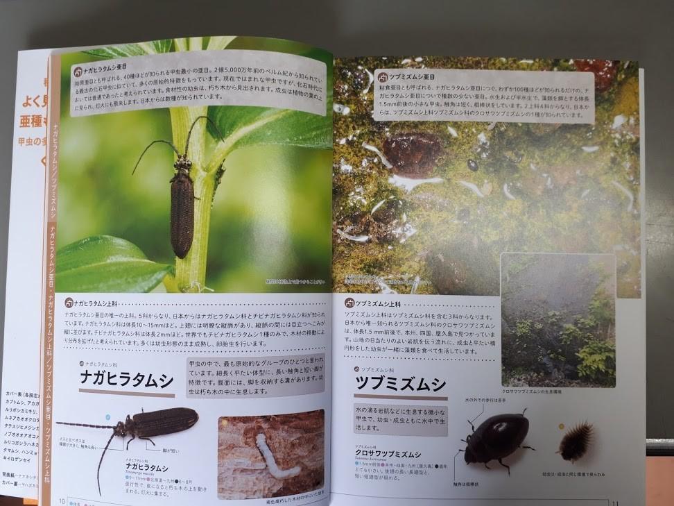 f:id:yoshitomushi:20190514125108j:plain