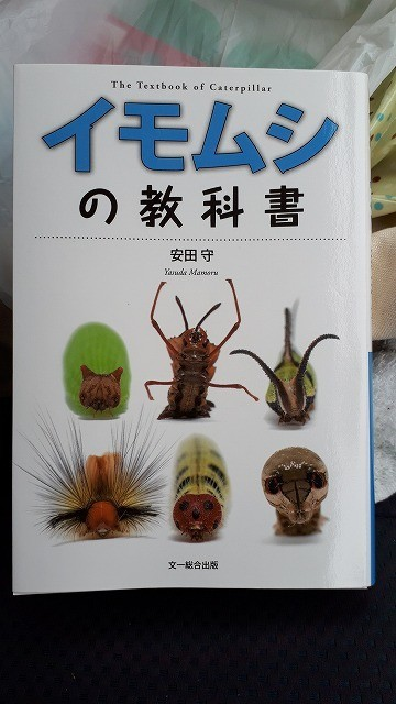 f:id:yoshitomushi:20190528232244j:plain