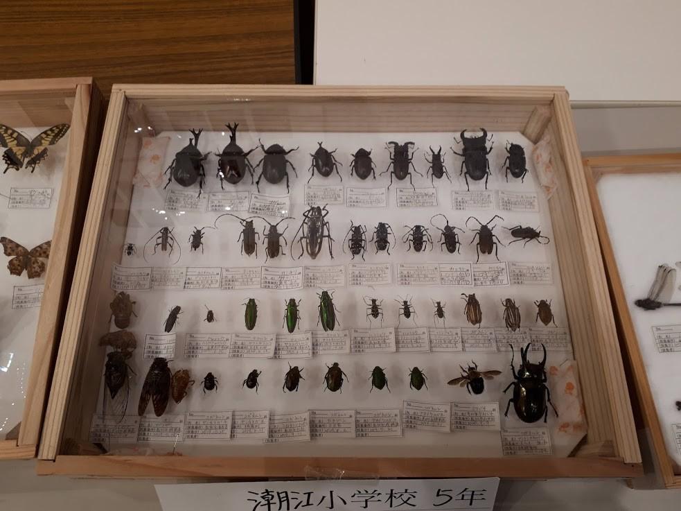 f:id:yoshitomushi:20201026083534j:plain