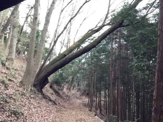 f:id:yoshixim:20170206114836j:plain