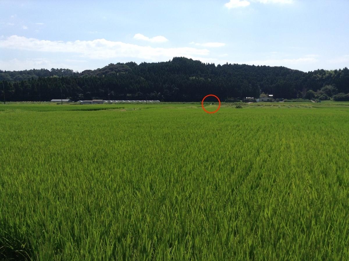 f:id:yoshizawar:20201018170008j:plain