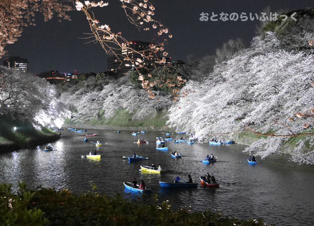 夜の千鳥ヶ淵緑道の桜とボート
