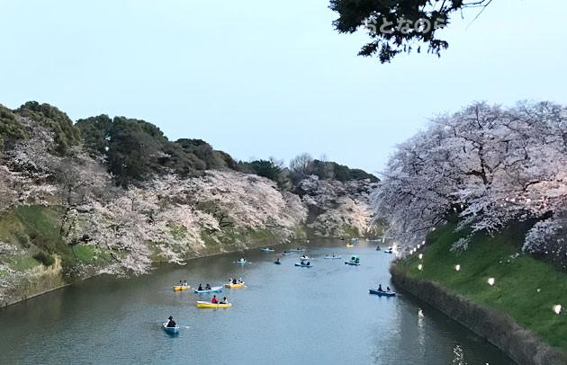 昼間の千鳥ヶ淵緑道の桜とボート